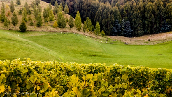 Shades of Green, Mission Estate, Hawkes Bay, New Zealand, Copyright Chris Gregory 2012