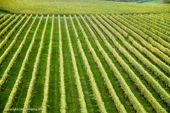 Rows, Mission Estate, Hawkes Bay, New Zealand, Copyright Chris Gregory 2012