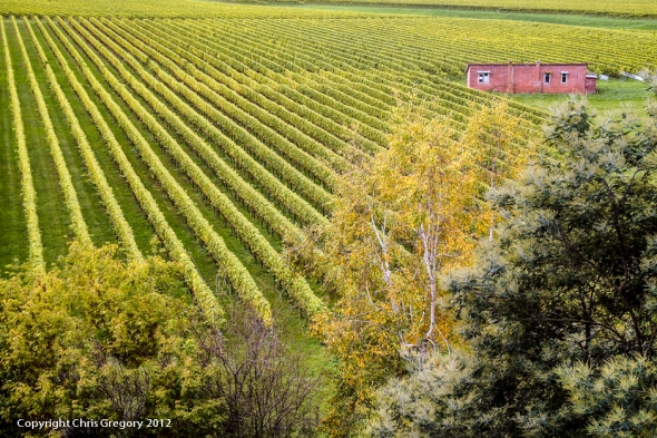 Mission Vineyard, Mission Estate, Hawkes Bay, New Zealand, Copyright Chris Gregory 2012