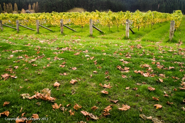 Fallen Leaves, Mission Estate, Hawkes Bay, New Zealand, Copyright Chris Gregory 2012