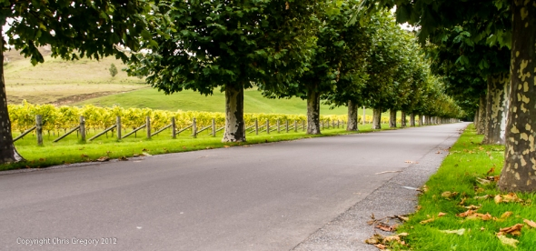 Avenue, Mission Estate, Hawkes Bay, New Zealand, Copyright Chris Gregory 2012