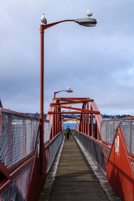 Iron Railway Bridge, Dunedin, Seagulls, Pedestrian, Otago, New Zealand, Copyright Chris Gregory 2012