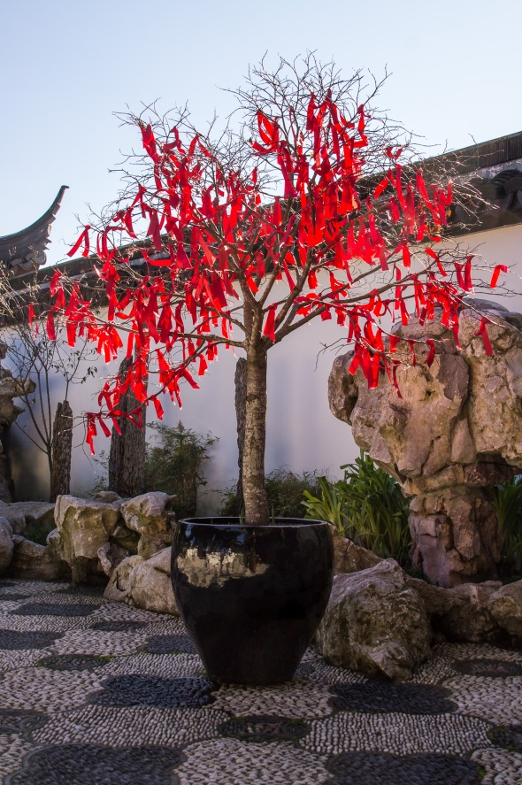 Red, Chinese Garden, Dunedin, Otago. New Zealand, Copyright Chris Gregory 2012