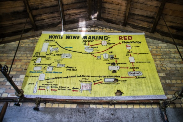 How to Make Wine, TK Vintners, Te Kauwhata, Waikato, New Zealand, Copyright Chris Gregory 2012