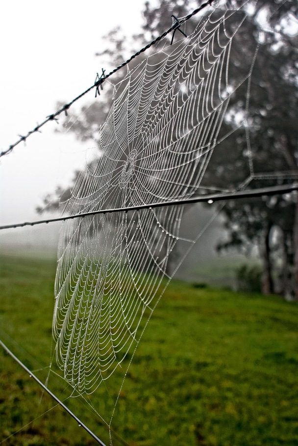 Strings of Pearls, spider web, fence, mist, Copyright Chris Gregory 2012