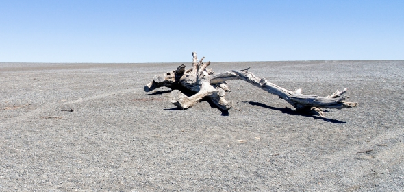 Driftwood, Lake Ferry, New Zealand, Copyright Chris Gregory 2012