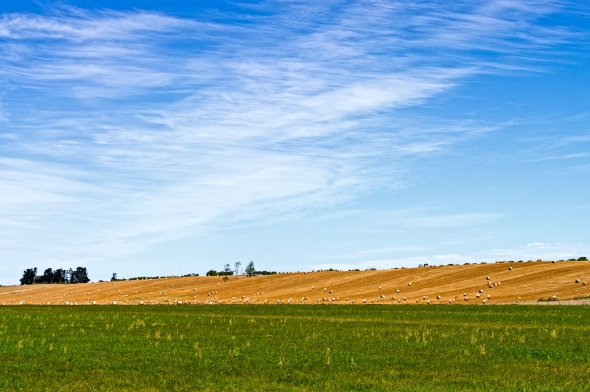 Hay Bails, South Canterbury, South Island, New Zealand, Copyright Chris Gregory 2013