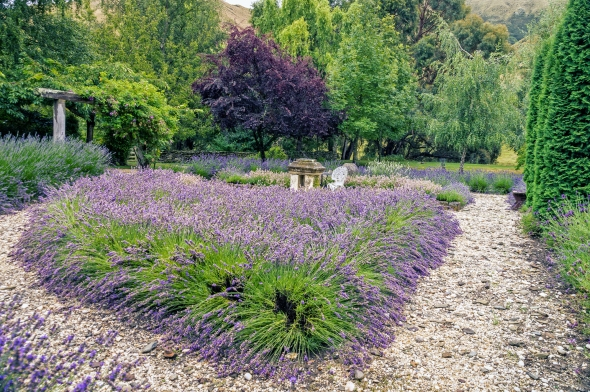 Lavender Farm, Danseys Pass, New Zealand, Copyright Chris Gregory 2013