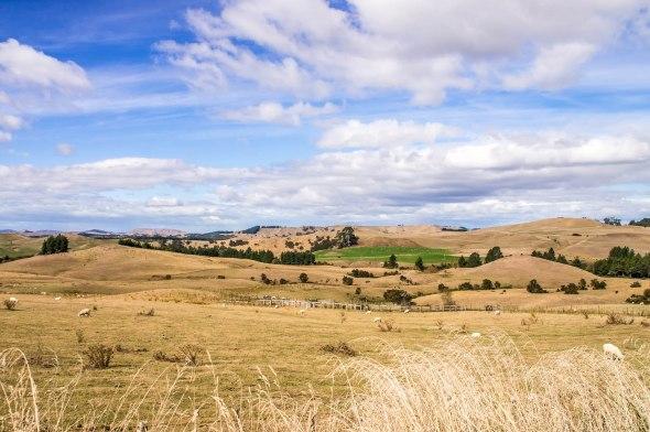 Kaweka Drought, Hawkes Bay, New Zealand, Copyright Chris Gregory 2013