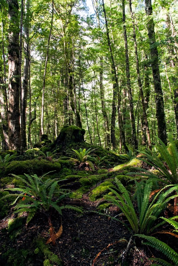 Kepler Track, Lake Te Anau, Otago, New Zealand, Copyright Chris Gregory 2013
